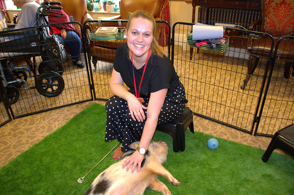 therapy pigs uk