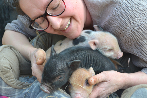 miniature piglets at the pigfather ltd in surrey