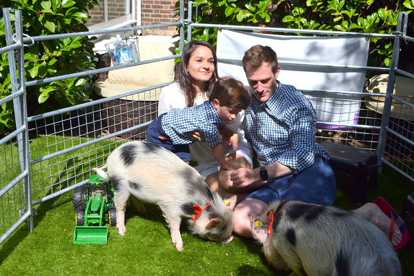 party with the pigfather's micro pigs