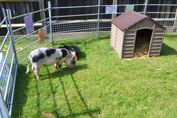 surrey borrow my piggy experience